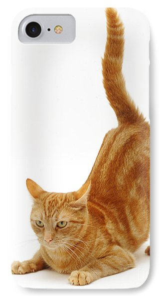 Ginger Cat Phone Case by Jane Burton