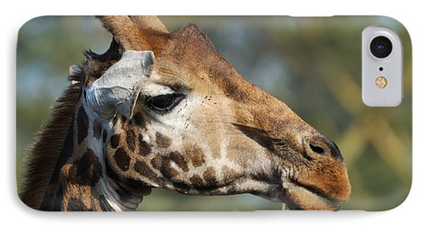 Giraffe Phone Case by Alan Clifford