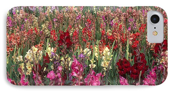 Gladioli Garden In Early Fall Phone Case by Yva Momatiuk and John Eastcott and Photo Researchers