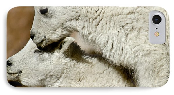 Goat Babies IPhone Case by Colleen Coccia