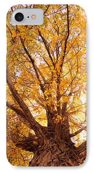 Golden Autumn View Phone Case by James BO  Insogna
