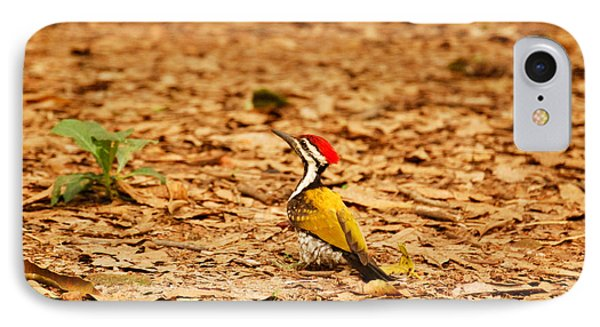 IPhone Case featuring the photograph Golden Backed Woodpecker by Fotosas Photography