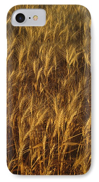 IPhone Case featuring the photograph Golden Beauty by Cheryl Perin
