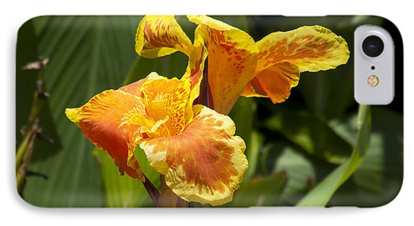 Golden Canna Phone Case by Kenneth Albin