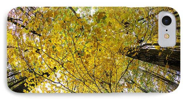 Golden Canopy Phone Case by Rick Berk