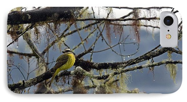 Golden-crowned Flycatcher Phone Case by Bob Gibbons