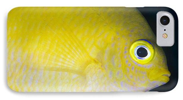 Golden Damsel Close-up, Papua New Phone Case by Steve Jones