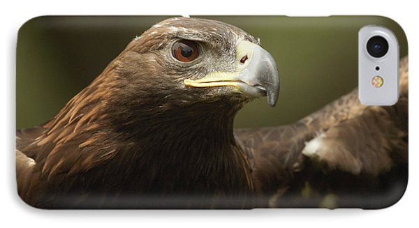 IPhone Case featuring the photograph Golden Eagle by Doug Herr