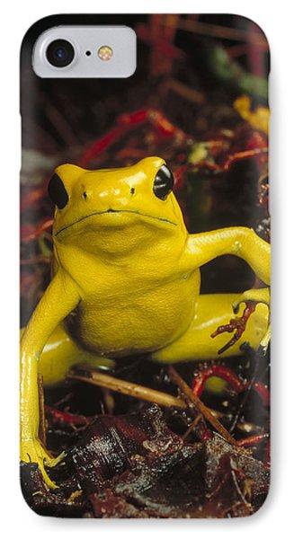 Golden Poison Dart Frog Phyllobates Phone Case by Mark Moffett