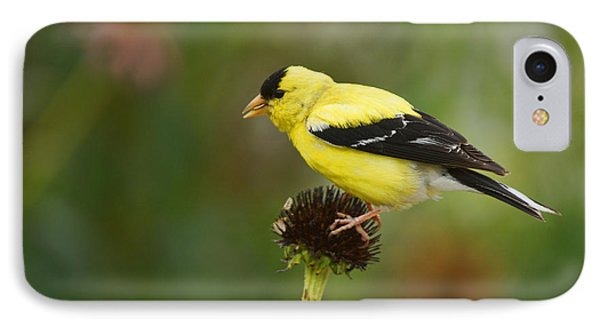 Goldfinch Phone Case by Alan Hutchins