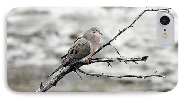 IPhone Case featuring the photograph Good Morning Dove by Elizabeth Winter
