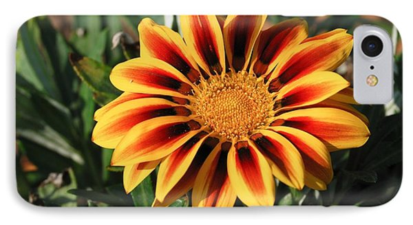 Gorgeous Beauty IPhone Case by Fotosas Photography
