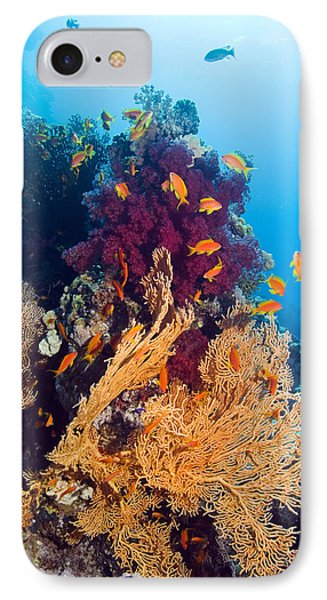Gorgonian And Soft Coral Phone Case by Georgette Douwma
