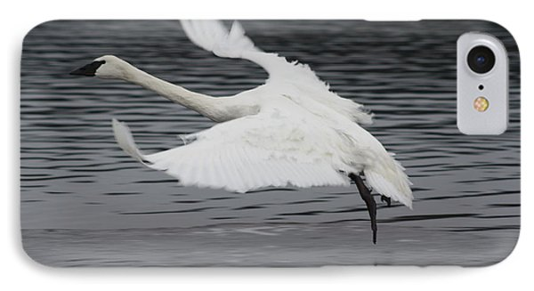 IPhone Case featuring the photograph Graceful Landing by Cathie Douglas