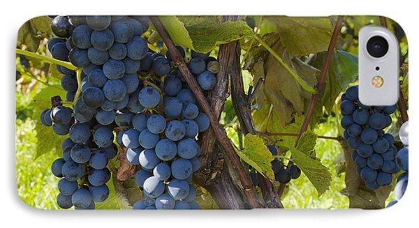 Grapes On A Vine Sutton Junction Quebec Phone Case by David Chapman