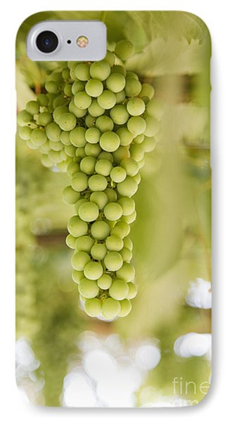 Grapes On Vine Phone Case by Andersen Ross