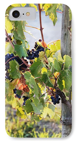 Grapes On Vine IPhone Case by Jeremy Woodhouse
