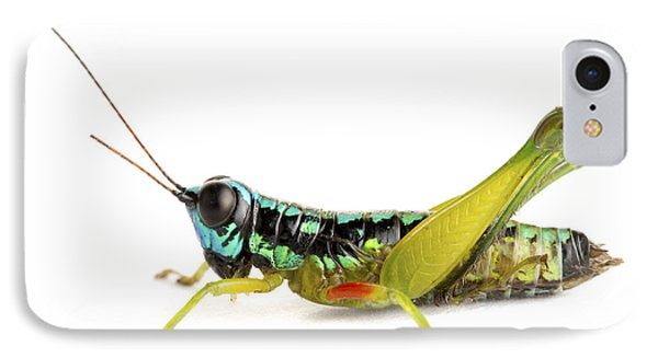 Grasshopper Barbilla Np Costa Rica Phone Case by Piotr Naskrecki