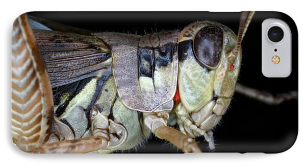 Grasshopper With Parasitic Mite Phone Case by Ted Kinsman