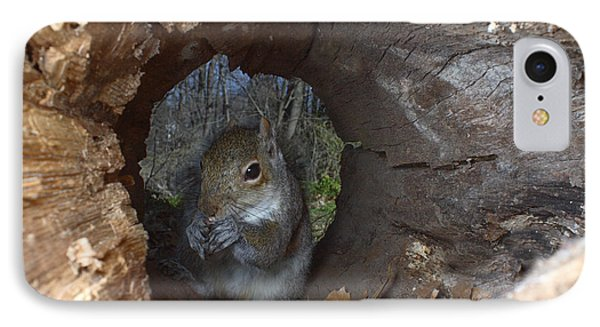 Gray Squirrel IPhone Case by Ted Kinsman