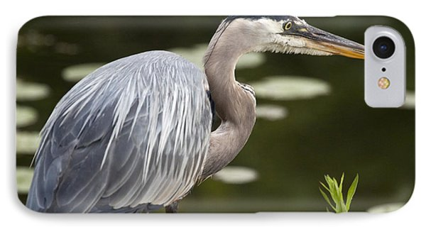 Great Blue Heron  IPhone Case by Jeannette Hunt