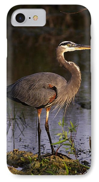 Great Blue Heron Phone Case by Natural Selection Ralph Curtin