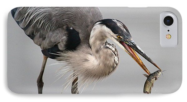 Great Blue Heron IPhone Case by Paul Marto