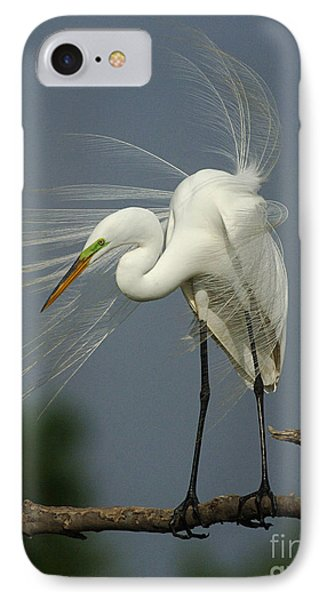 Great Egret IPhone Case by Bob Christopher