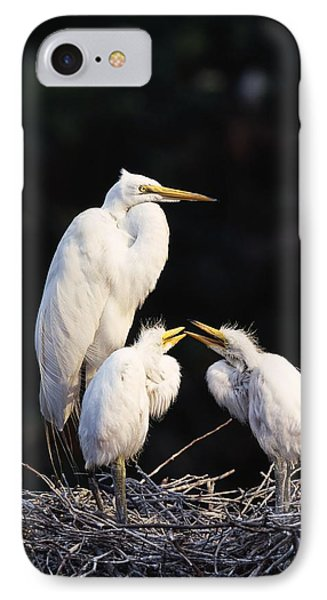 Great Egret In Nest With Young Phone Case by Natural Selection David Ponton