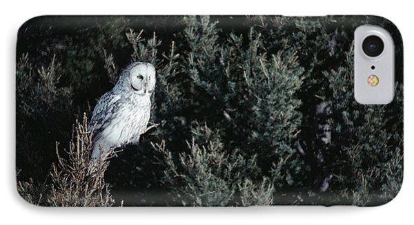 Great Gray Owl Strix Nebulosa In Blonde Phone Case by Michael Quinton