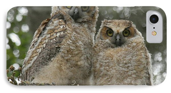 Great Horned Owl Babies IPhone Case by Myrna Bradshaw