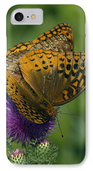 Great Spangled Fritillaries On Thistle Din108 IPhone Case by Gerry Gantt