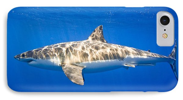 Great White Shark Carcharodon Carcharias Phone Case by Carson Ganci