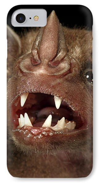Greater Spear-nosed Bat Phyllostomus IPhone Case by Christian Ziegler