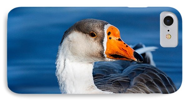 Greater White Frontal-goose Striking A Pose IPhone Case by Ann Murphy