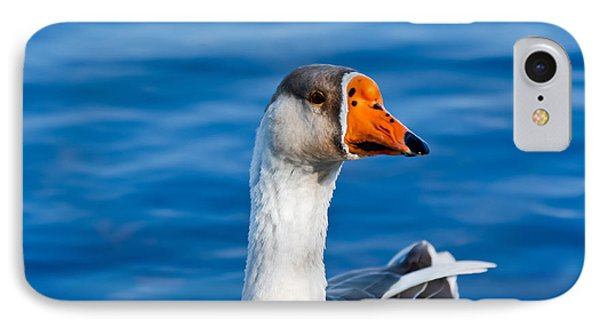 Greater White-fronted Goose Looking For A Mate IPhone Case
