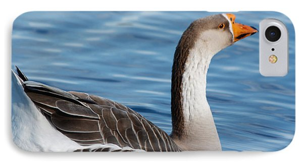 Greater White-fronted Goose Paddling Away IPhone Case by Ann Murphy