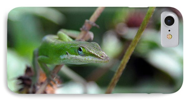 Green Anole IPhone Case by Kay Lovingood