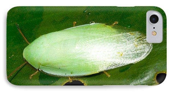 Green Cockroach Phone Case by Dante Fenolio