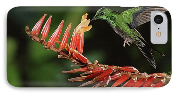 Green-crowned Brilliant Heliodoxa Phone Case by Michael & Patricia Fogden