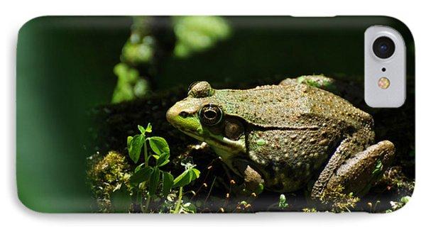 Green Frog Rana Clamitans IPhone Case by Rebecca Sherman