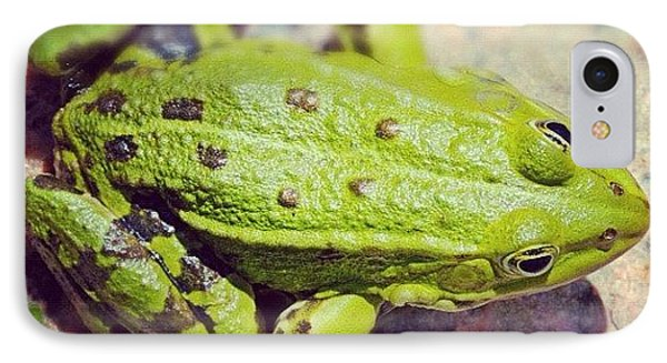 Green Frog Sitting On Stone IPhone Case by Matthias Hauser