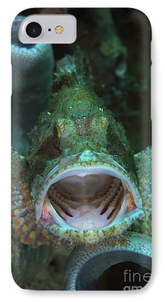 Green Grouper With Open Mouth, North Phone Case by Mathieu Meur