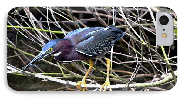 IPhone Case featuring the photograph Green Heron by Pravine Chester