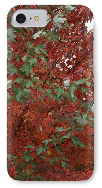 Green Leaves Against Red Leaves IPhone Case by Mick Anderson