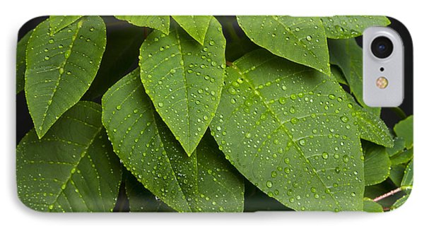 Green Leaves And Water Drops Phone Case by James BO  Insogna