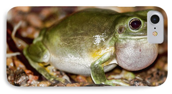 Green Tree Frog Phone Case by Douglas Barnard