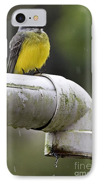 Grey-capped Flycatcher IPhone 7 Case by Heiko Koehrer-Wagner