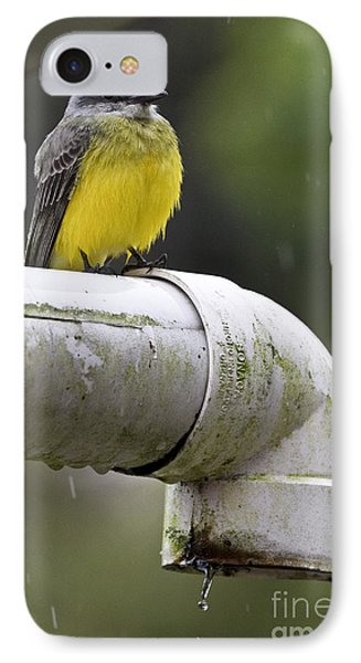 Grey-capped Flycatcher IPhone Case by Heiko Koehrer-Wagner