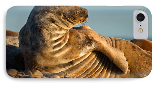 Grey Seal Halichoerus Grypus Watching IPhone Case